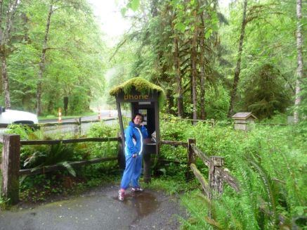Hoh Rainforest
