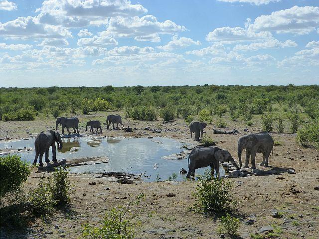eerste groepje olifanten
